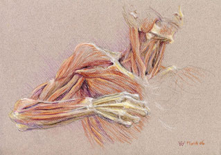 Drawing the Bow, pastel drawing by Australian artist Susan Dorothea White