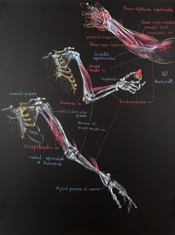 Drawing on Anatomy: Art and Science of the Human Body - Anatomical ...
